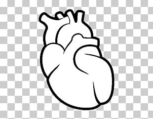 310x241 human heart png images, human heart clipart free download
