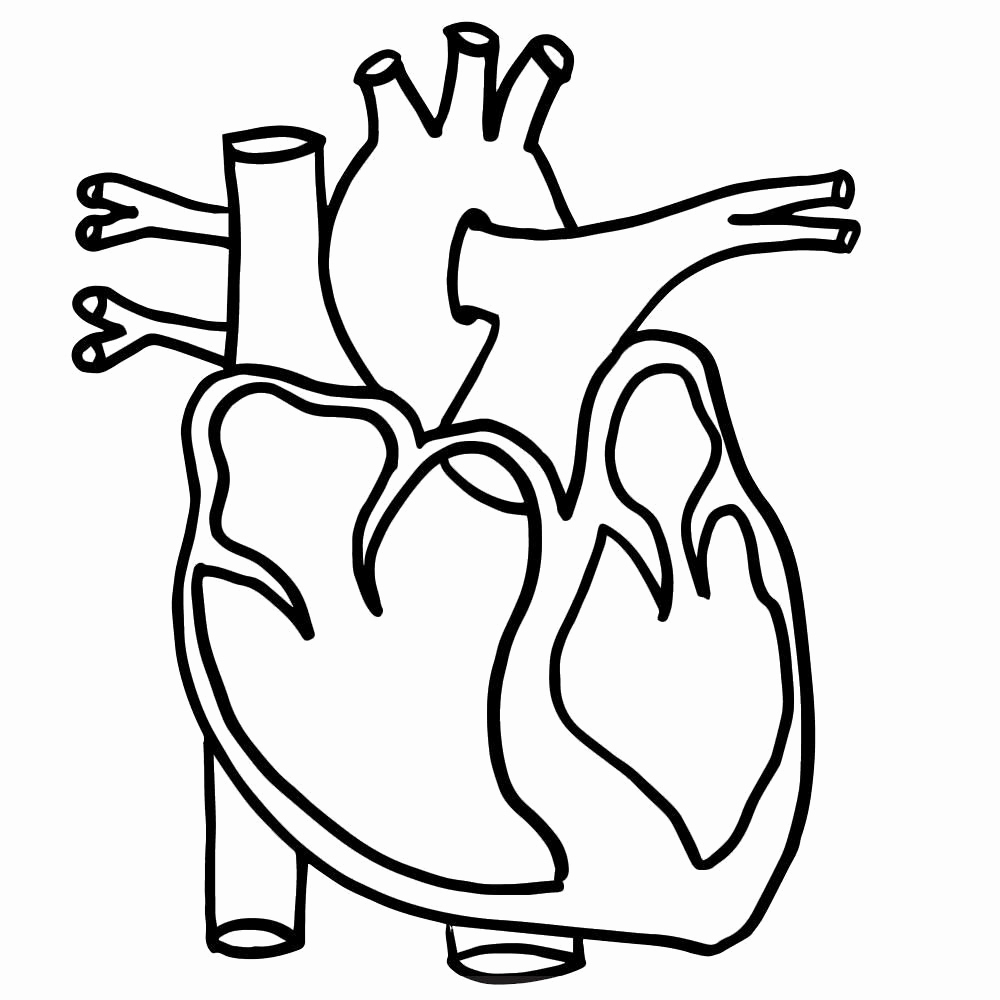 Human Heart Drawing | Free download on ClipArtMag