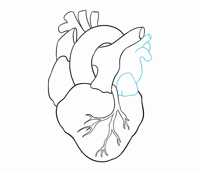 820x705 sketch of human heart lovely free how to draw a human heart