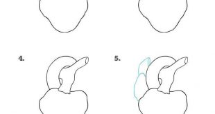 310x165 How To Draw A Mushroom