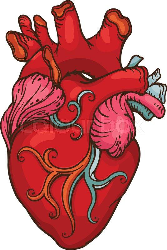 535x800 Human Heart Drawing