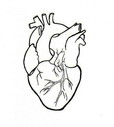473x530 Human Heart Embroidery Anatomical Line Art Simple Embroidery