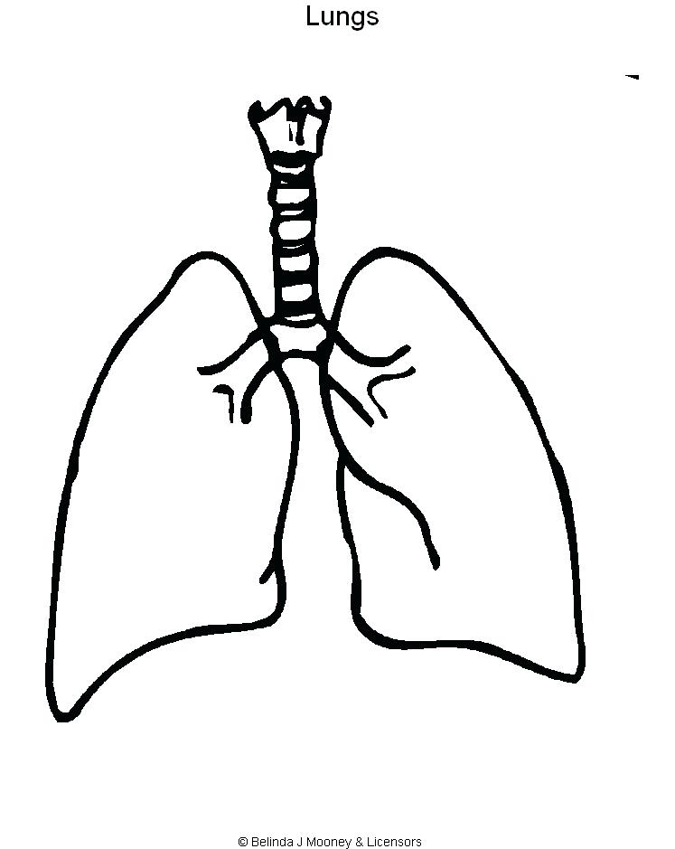 Human Lungs Drawing
