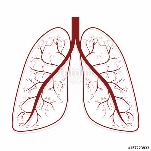 500x500 lungs human lungs anatomy symbol stock image and royalty free