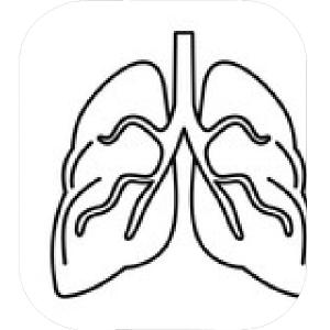 300x300 photostock vector human lungs respiratory system healthy lungs