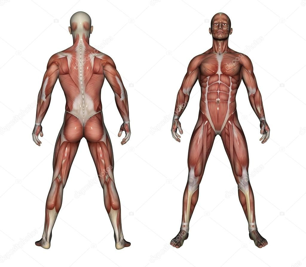 1024x894 human anatomy male human anatomy drawing human anatomy picture