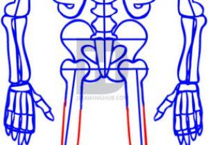 300x210 human body skeletal system skeletal system drawing human skeletal
