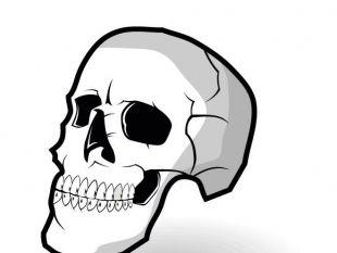 310x233 Human Skull Vector Graphics Free Vectors Ui Download