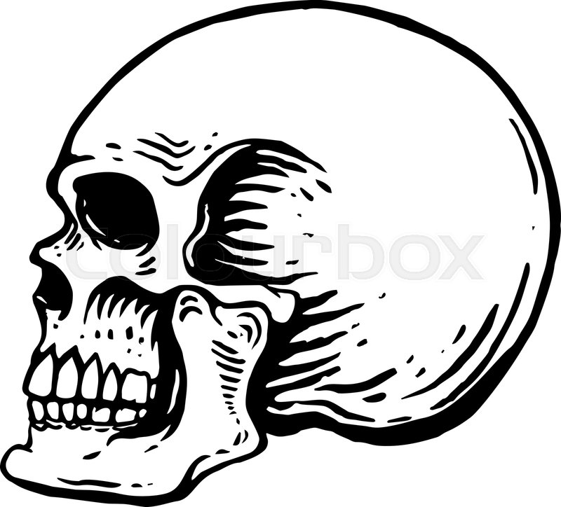 800x724 Hand Drawn Human Skull Illustration On Stock Vector Colourbox