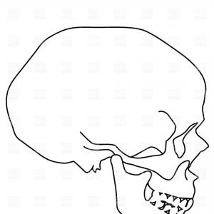 300x300 Human Skull Sideview Vector Clipart Lazttweet