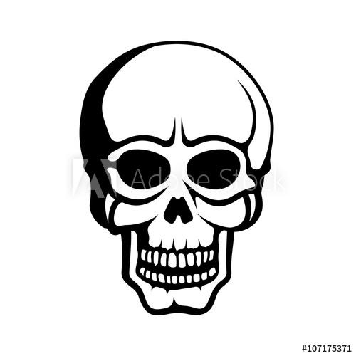 500x500 Human Skull On White Background Vector