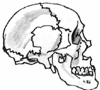 334x299 The Hindu Skull Lines