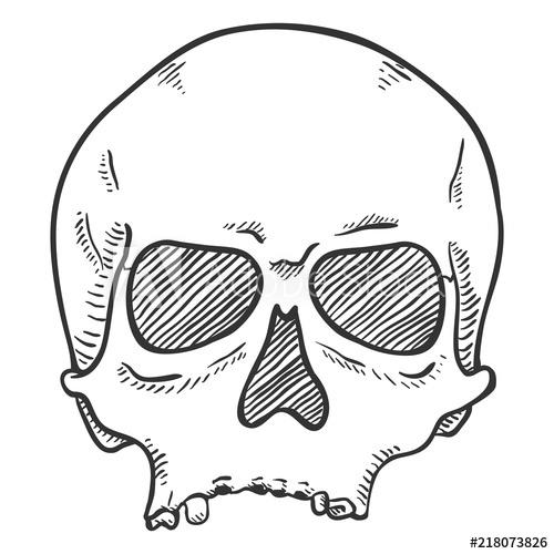 500x500 Vector Single Sketch Illustration