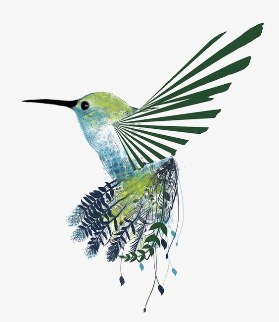 564x650 drawing hummingbird, hummingbird clipart, hand painted hummingbird