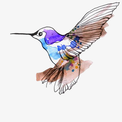 400x400 drawing hummingbird, hummingbird clipart, hummingbird, watercolor