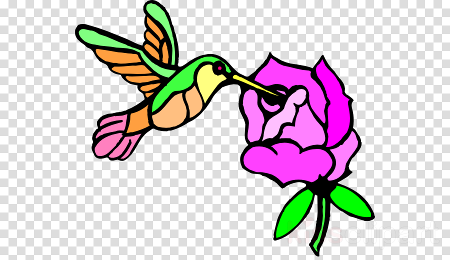 900x520 download hummingbird flower clipart hummingbird drawing clip art