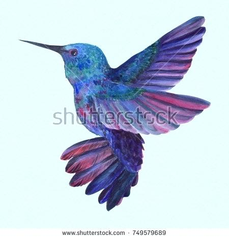 450x470 hummingbird drawing bird of the hummingbird drawing