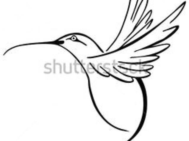 640x480 drawing a cartoon hummingbird best hummingbird images