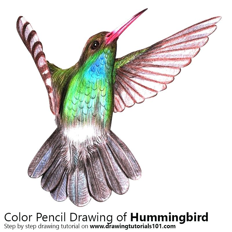 800x800 drawing of a humming bird hummingbird drawing clip art hummingbird