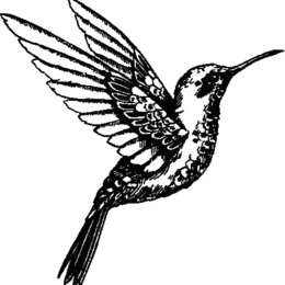 260x260 download hummingbird drawing clipart hummingbird drawing clip art