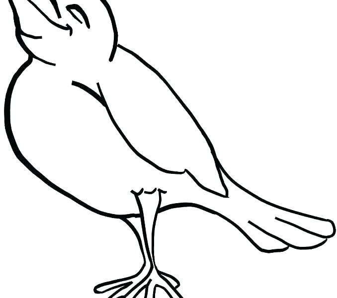 678x600 outline of birds outline of birds birds outline pictures birds