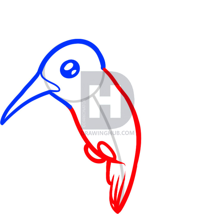 733x720 How To Draw A Hummingbird For Kids, Step