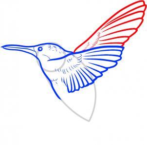 302x297 How To Draw A Hummingbird, Step