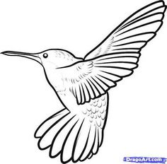 236x232 How To Draw A Hummingbird Flying Step