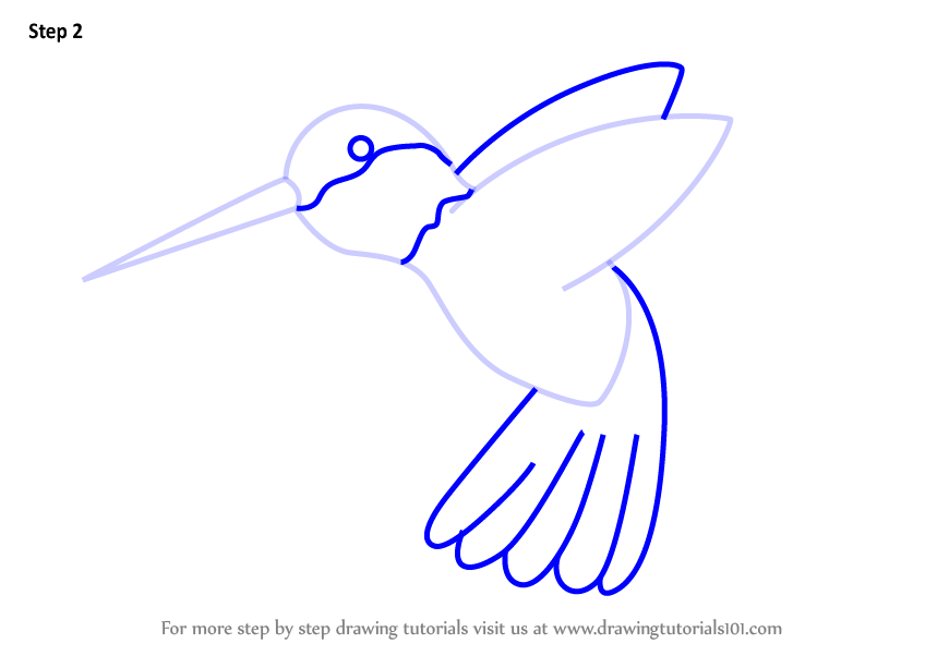 848x602 Learn How To Draw A Hummingbird For Kids