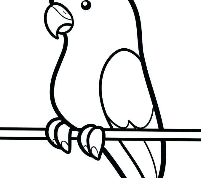 678x600 Various Elegant Collection Simple Bird Drawing For Kids Pencil
