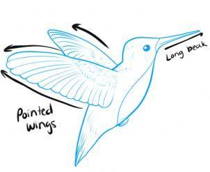 302x247 How To Draw Hummingbirds Step Sumi