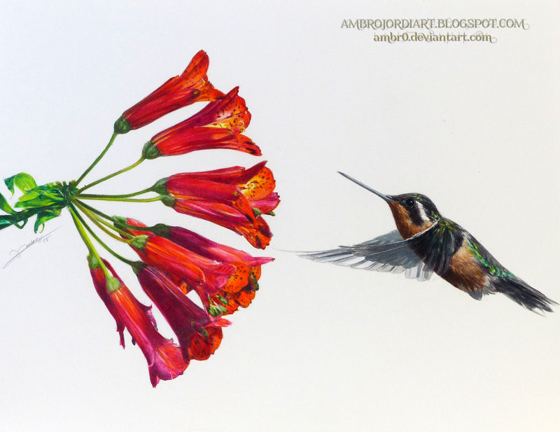 800x617 Drawings Of Hummingbirds And Flowers Learn How To Draw