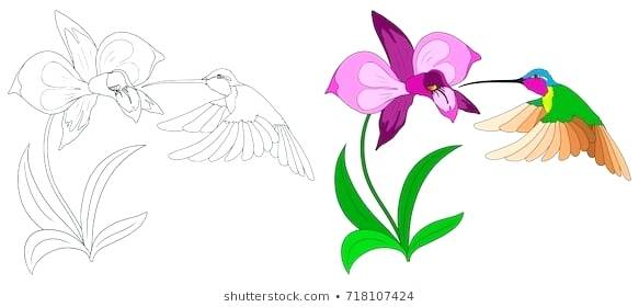 583x280 hummingbird outline hummingbird design simple hummingbird design