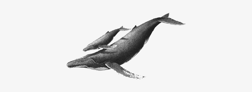 820x299 whale drawing, whale sketch, humpback whale tattoo