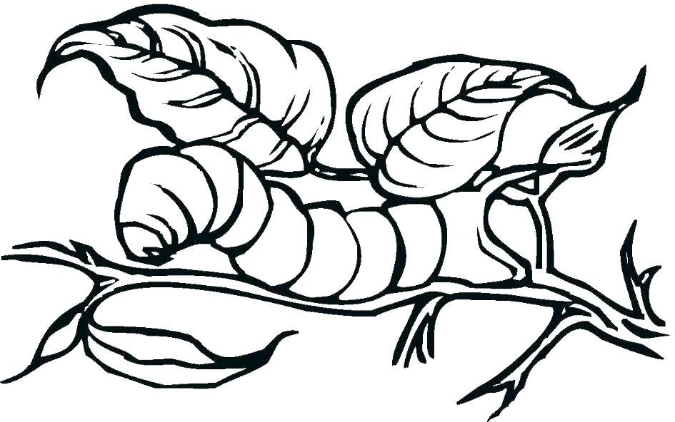 945x592 caterpillar coloring pages caterpillar coloring