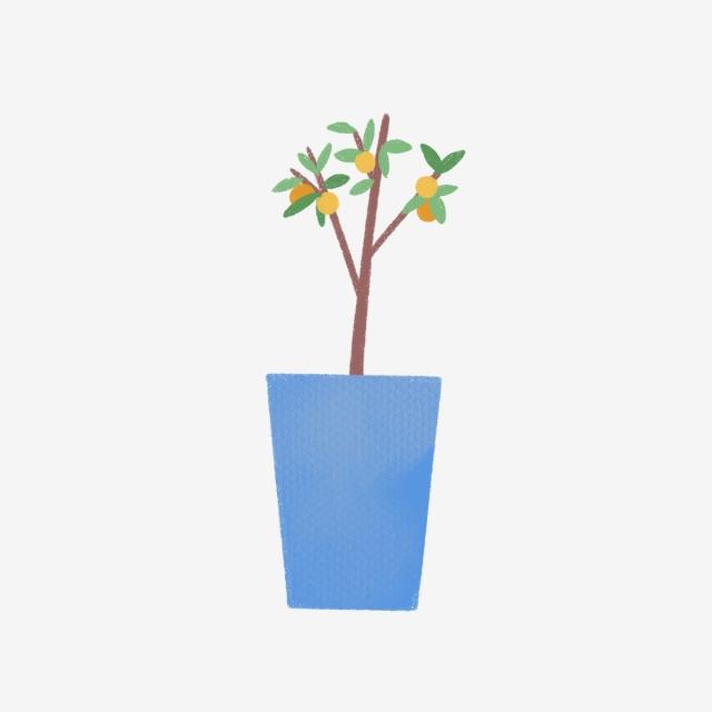640x640 hand drawn small lemon tree in pot, lemon tree, drawing, nature