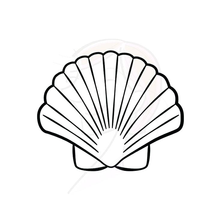 736x736 seashell drawing seashell seashell drawing easy