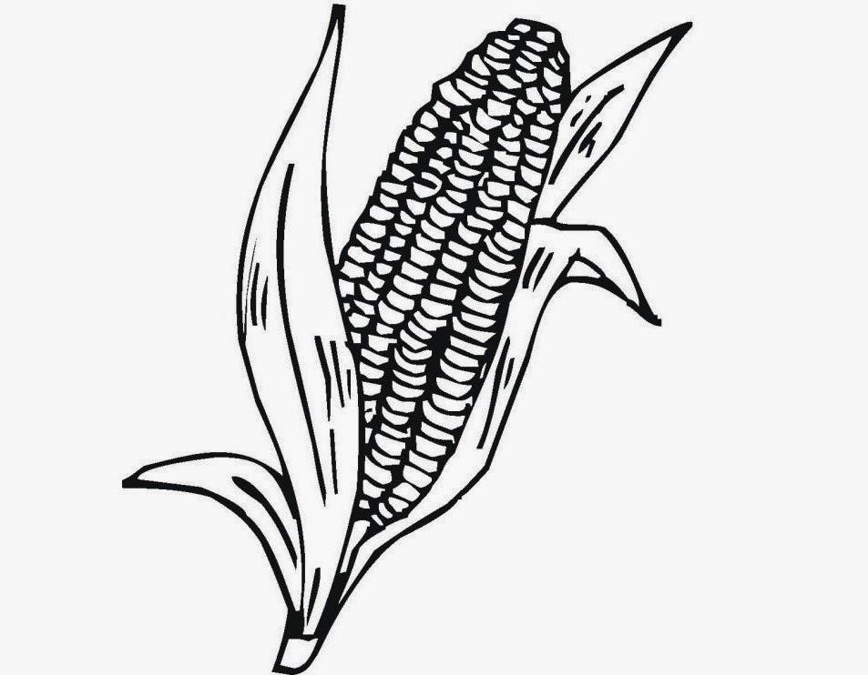 Indian Corn Drawing