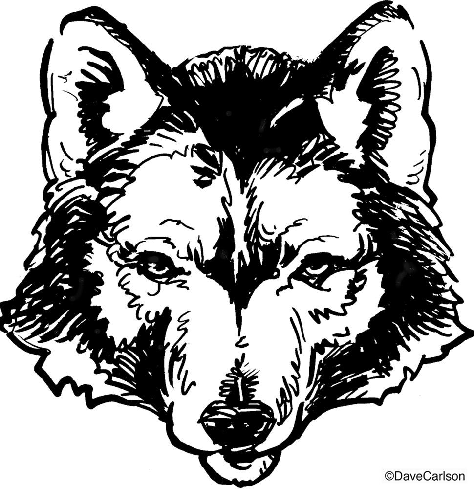 970x1000 Wolf Illustration Carlson Stock Art