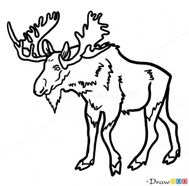 665x653 Moose Drawing Free Download