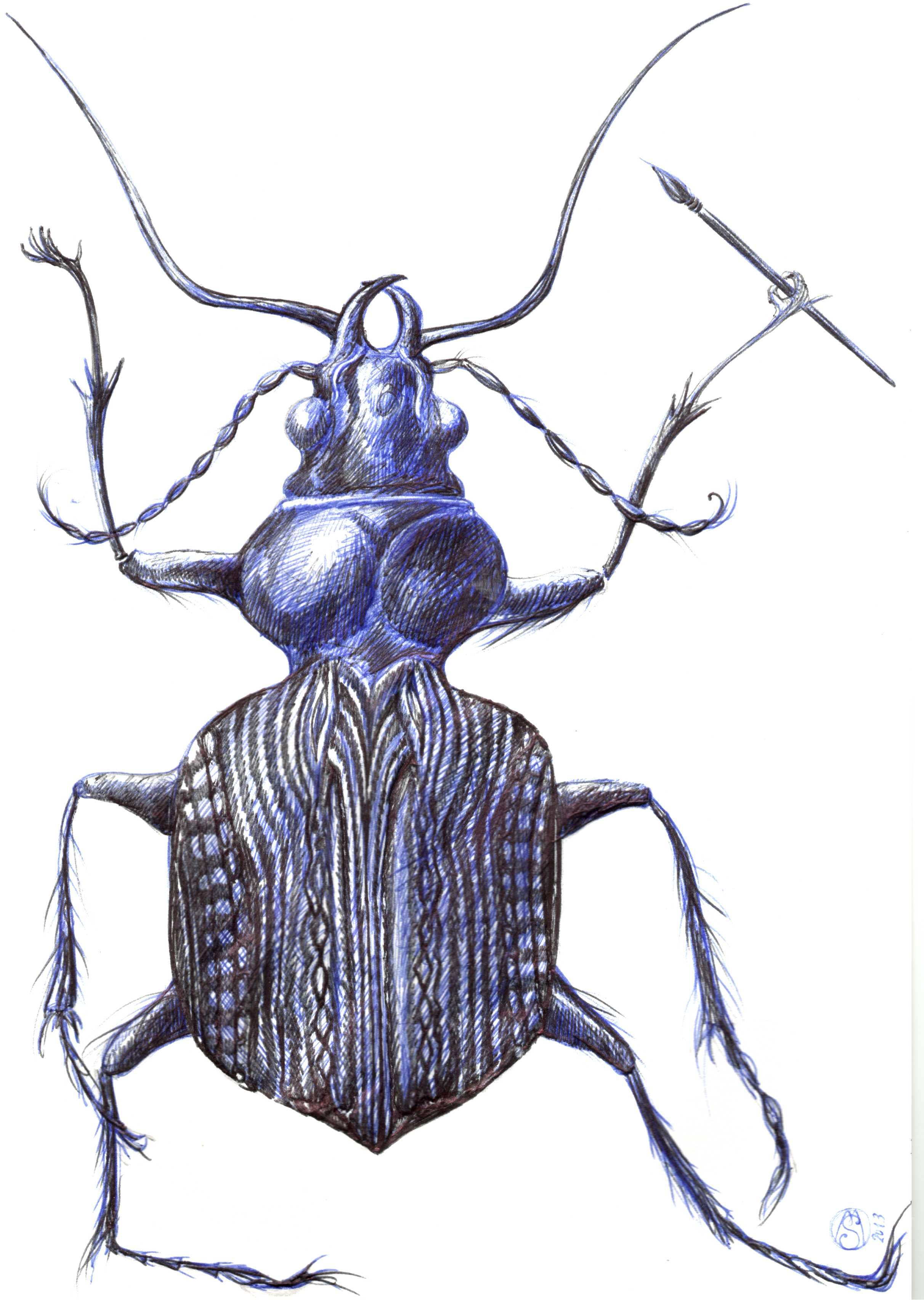 2424x3408 insect in ballpoint biro drawings in biro drawing, biro