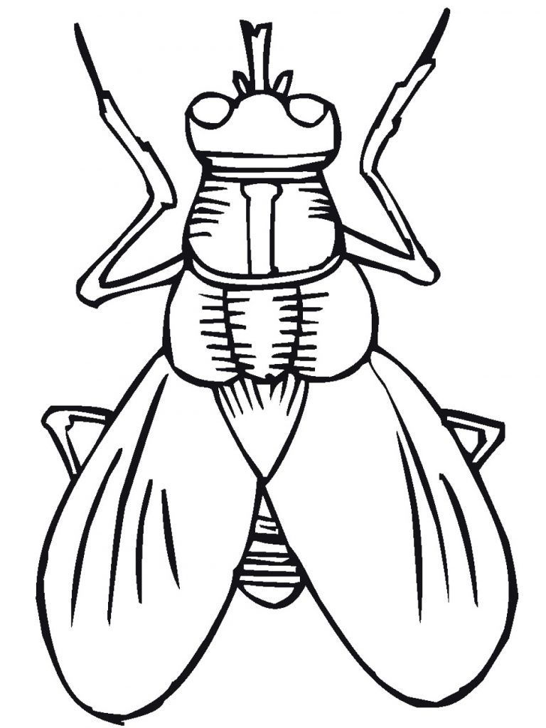 768x1024 insect coloring pages ideer og inspiration insect coloring