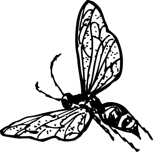 Insect Line Drawing