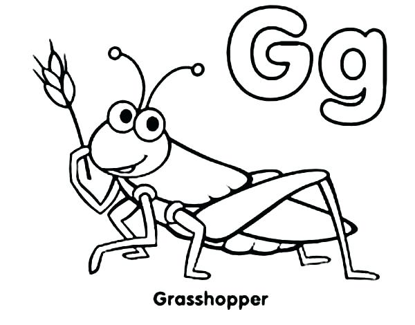 600x470 draw a grasshopper grasshopper on the flower insects coloring