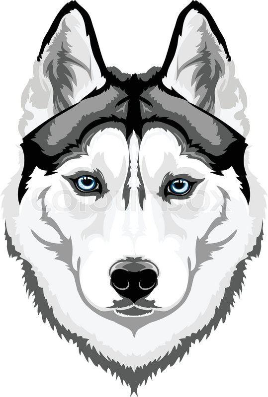 539x800 Vector Head Intelligent Dog Breed Siberian Husky Vector