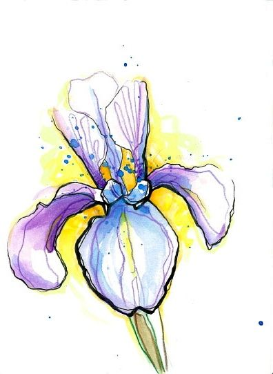 Iris Flower Drawing