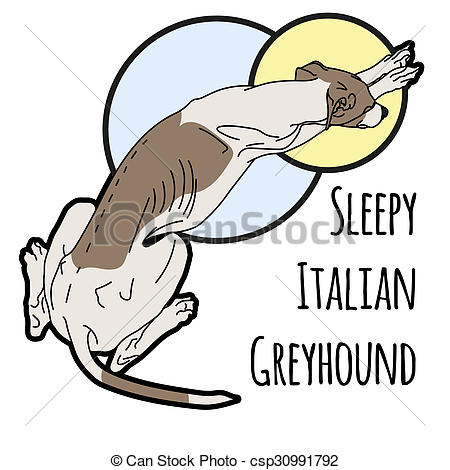 450x470 Illustration Of A Sleeping Italian Greyhound Without A Collar