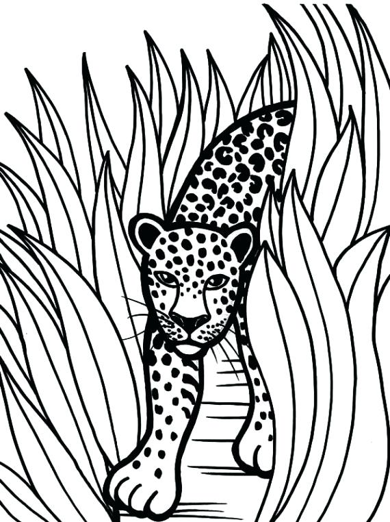 570x762 Jaguar Coloring Pages Black