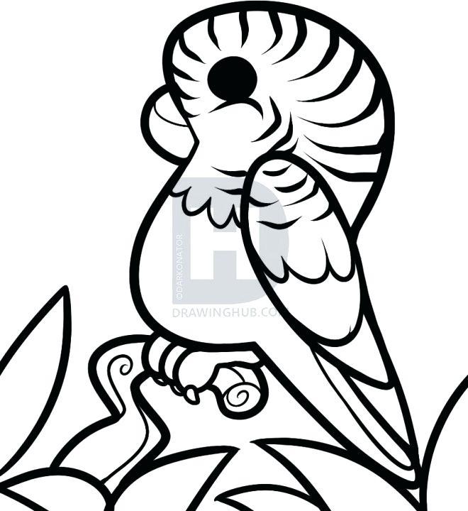 660x720 Parakeet Drawing