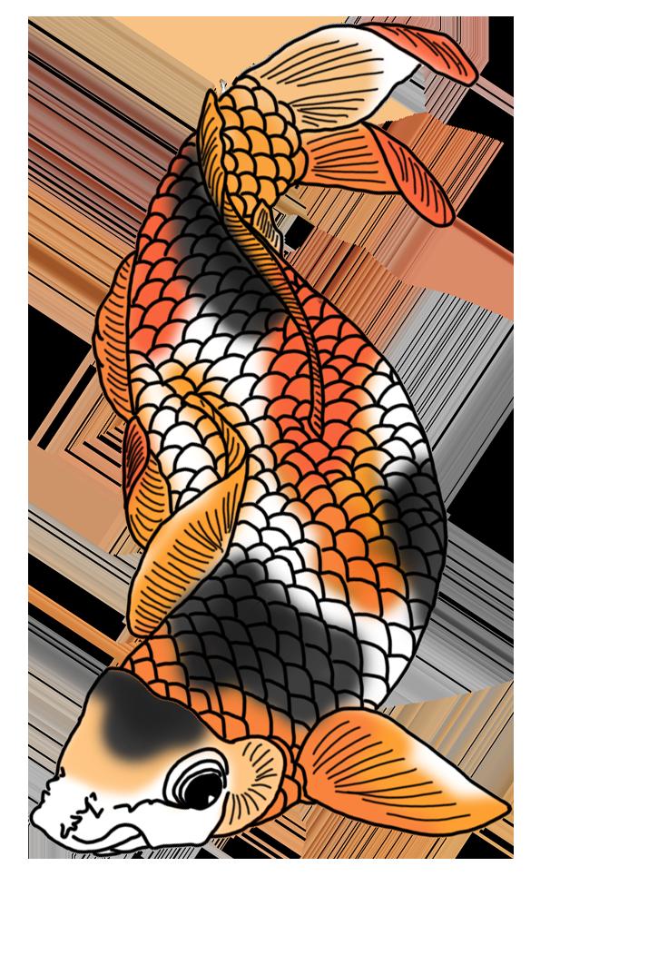 736x1063 Colorful Koi Fish Drawings